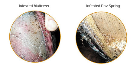 if bed bugs are detected there are some measures you can take to protect yourself and your mattress one of the only ways to get rid of bed bugs that are